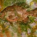Fish by John Vandebrooke