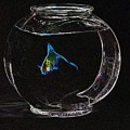 Fishbowl by Tim Allen