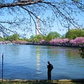 Fisherman In Dc by Jeanette Oberholtzer