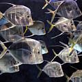 Fishy by Richard Gerken