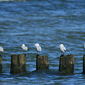 Five Birds by Marta Grabska