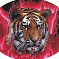 Flame Tiger by Kathy Frankford