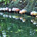Flamingos by Nora Martinez