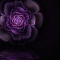 Fleur by John Edwards