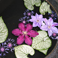 Floating Clematis by Addie Hocynec