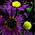 Floral 81 by Chuck Landskroner