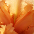 Floral Art Orange Iris Flower Sunlit Baslee Troutman by Baslee Troutman