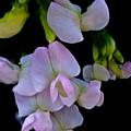 Floral Cascade by Debra     Vatalaro