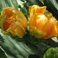 Flores De Cactus by Diana Moya