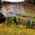 Florida Wetland by Nicole I Hamilton