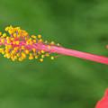 Flower 5 by Eric Workman