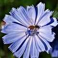 Flower And Bee 2 by Joe Faherty
