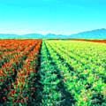 Flower Farm 1 by Dominic Piperata