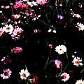 Flower Field by Marsha Heiken