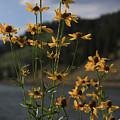 Flower Mountain View by Kim Henderson