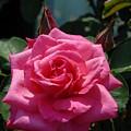 Flowers 61 by Joyce StJames