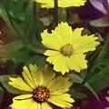 Flowers by Eileen Blair