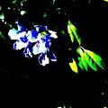 Flowers In The Dark by Douglas Kriezel