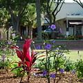 Flowers On Main Street by Jeremy Adams