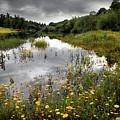 Flowery Lake by Carlos Caetano