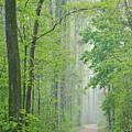 Foggy Spring Forest by Dean Pennala