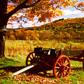 Foliage And Old Wagon by Roger Soule