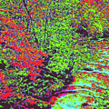 Foliage Stream D4 by Modified Image
