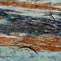Follow Me To The Sea by Jennifer A Garcia