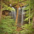 Forest Falls by Douglas Barnett