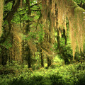 Forest Fantasy - Quinault - Gateway To Paradise On The Olympic Peninsula Wa by Christine Till