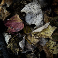 Forest Floor - Leaf 6 by Pete Hellmann