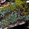 Forest Floral Delight by Douglas Barnett
