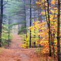 Forest Walk by John Bartosik