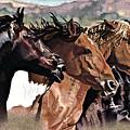 Four Horses by Judy Skaltsounis