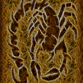 Fractal Abstract Scorpion by David G Paul