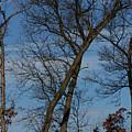 Framed In Oak - 2 by Linda Shafer