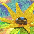 Frog A Lilly 3 - Photosbydm by Debbie May
