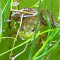 Frog Playing Hide N Seek by Brittany Horton