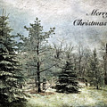 Frosty Christmas Card by Lois Bryan