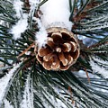 Frosty Pine Cone by RiaL Treasures