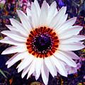Full Bloom by P Donovan