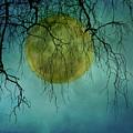 Full Moon by Jill Ferry