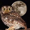 Full Moon by Mircea Costina Photography