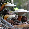 Fungi 1 by J M Farris Photography