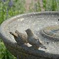 Garden 28 by Joyce StJames