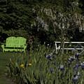 Garden Bench Green by Sara Stevenson
