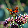 Garden Butterfly by Val Jolley