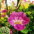 Garden Flower by Galeria Trompiz