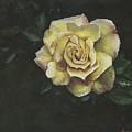 Garden Rose by Jeff Brimley