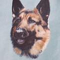 German Shepherd  by Janice M Booth